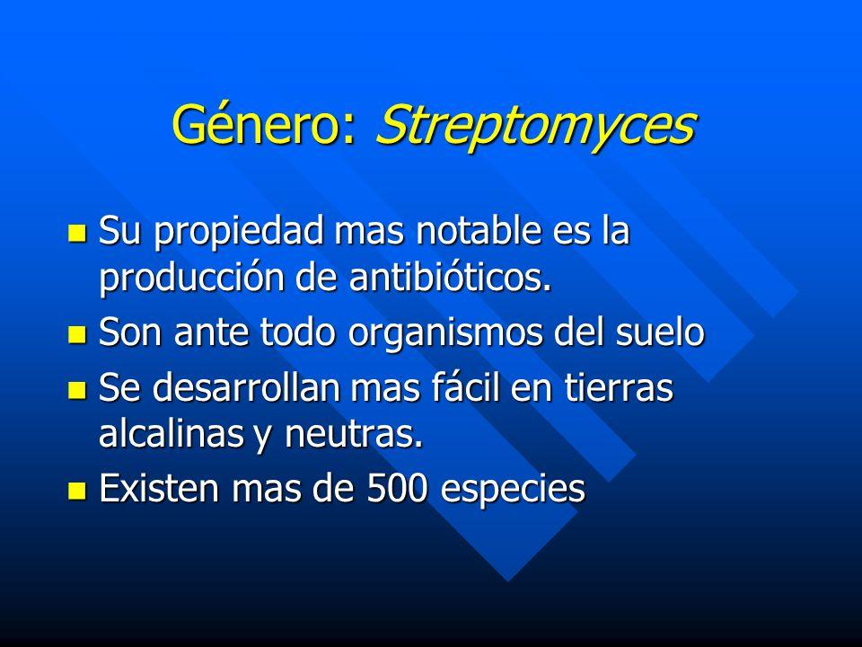 Género: Streptomyces Su propiedad mas notable es la producción de antibióticos. Son ante todo organismos del suelo.