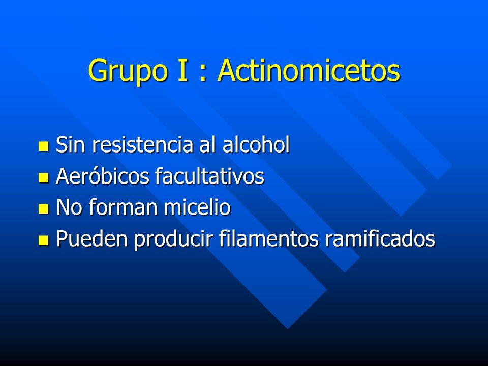 Grupo I : Actinomicetos