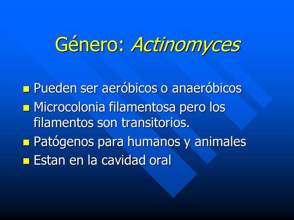 Género: Actinomyces Pueden ser aeróbicos o anaeróbicos