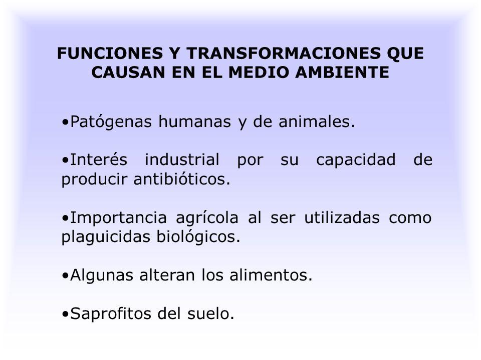 FUNCIONES Y TRANSFORMACIONES QUE CAUSAN EN EL MEDIO AMBIENTE