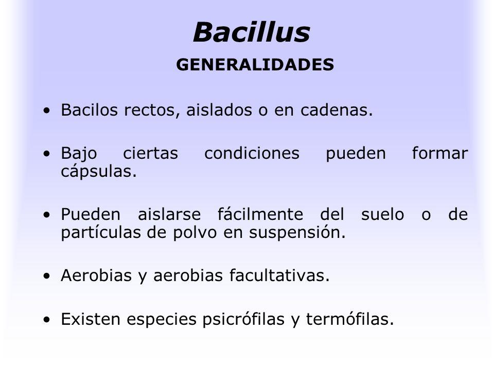 Bacillus GENERALIDADES Bacilos rectos, aislados o en cadenas.