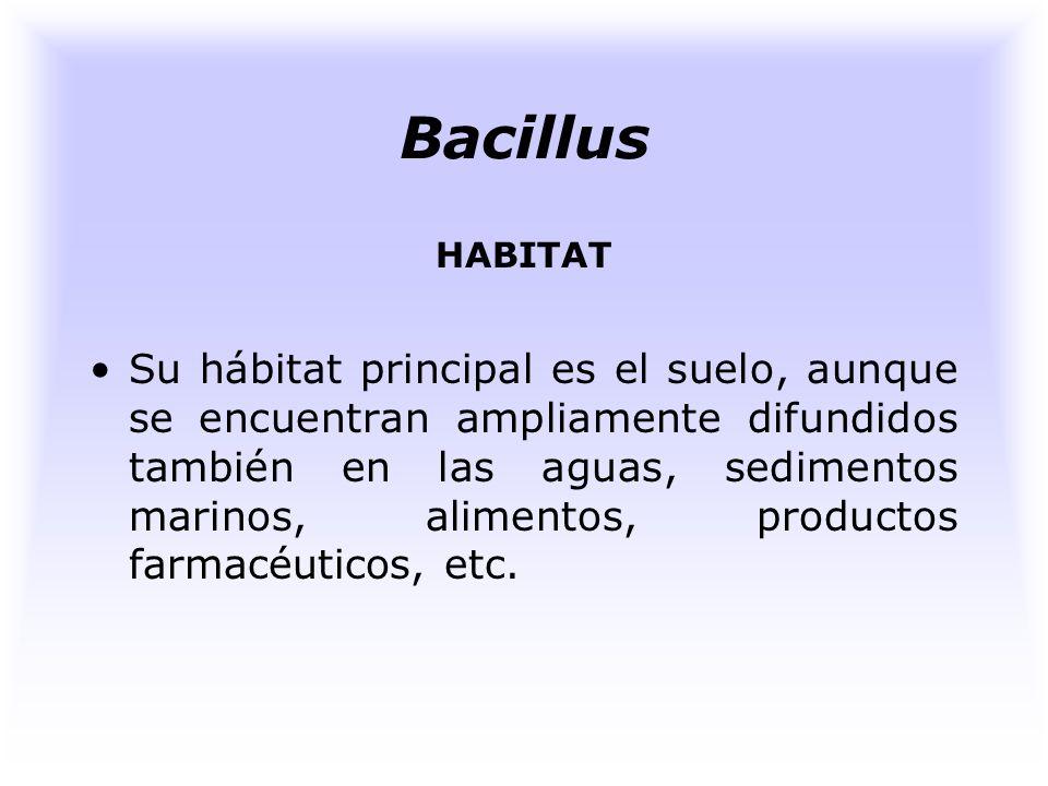Bacillus HABITAT.