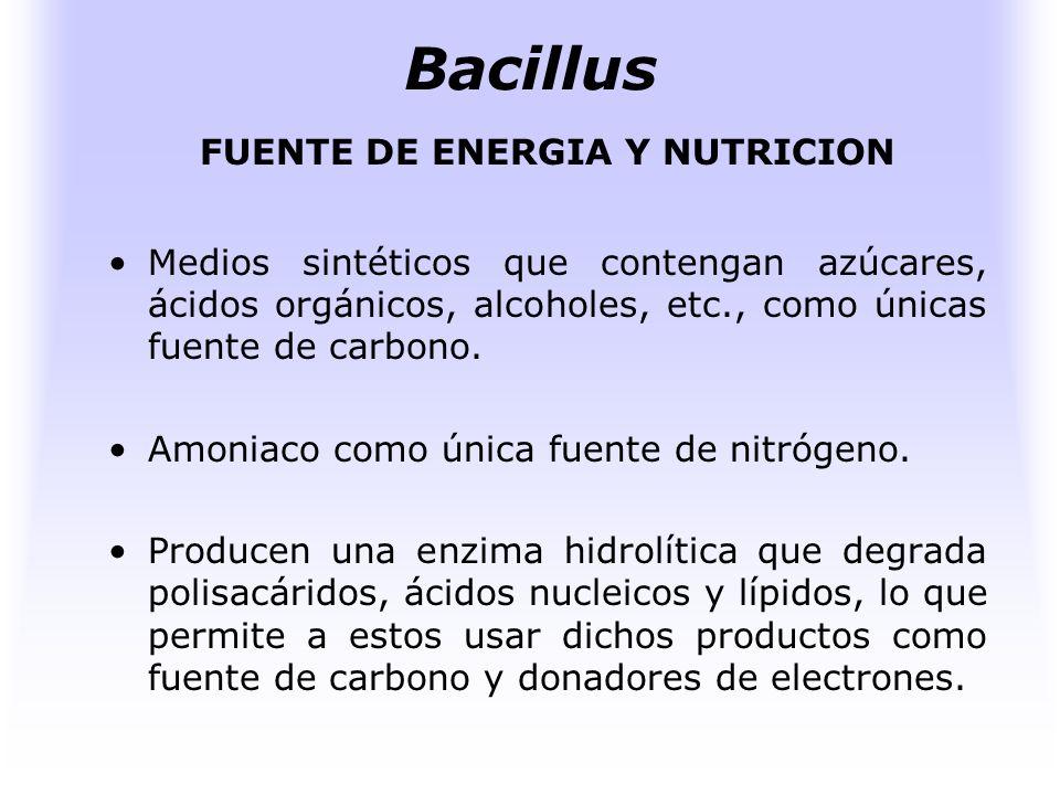 FUENTE DE ENERGIA Y NUTRICION