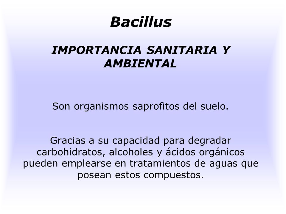 Bacillus IMPORTANCIA SANITARIA Y AMBIENTAL Son organismos saprofitos del suelo.