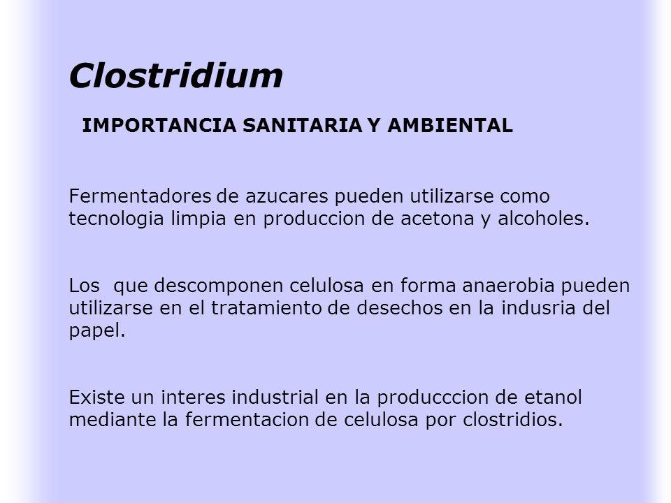 Clostridium IMPORTANCIA SANITARIA Y AMBIENTAL Fermentadores de azucares pueden utilizarse como tecnologia limpia en produccion de acetona y alcoholes.
