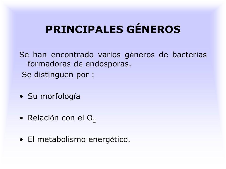 PRINCIPALES GÉNEROS Se han encontrado varios géneros de bacterias formadoras de endosporas. Se distinguen por :