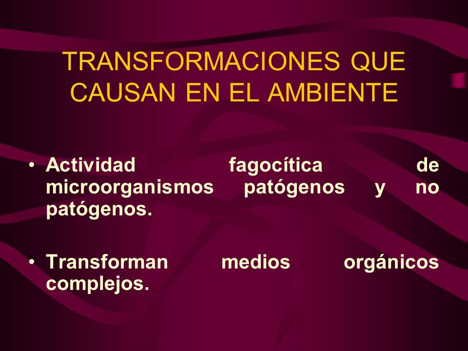 TRANSFORMACIONES QUE CAUSAN EN EL AMBIENTE