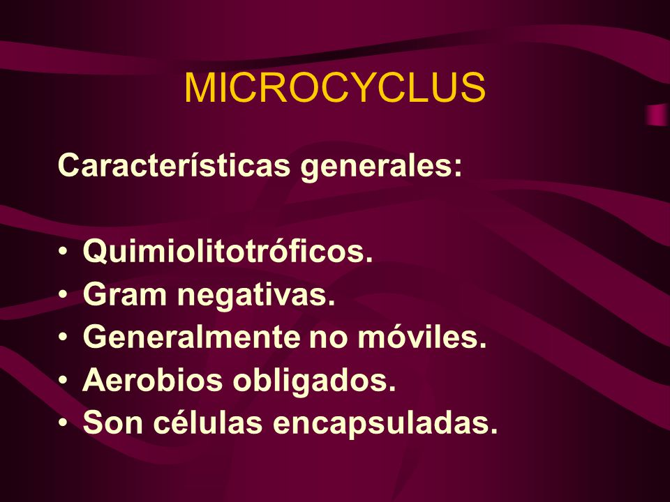 MICROCYCLUS Características generales: Quimiolitotróficos.