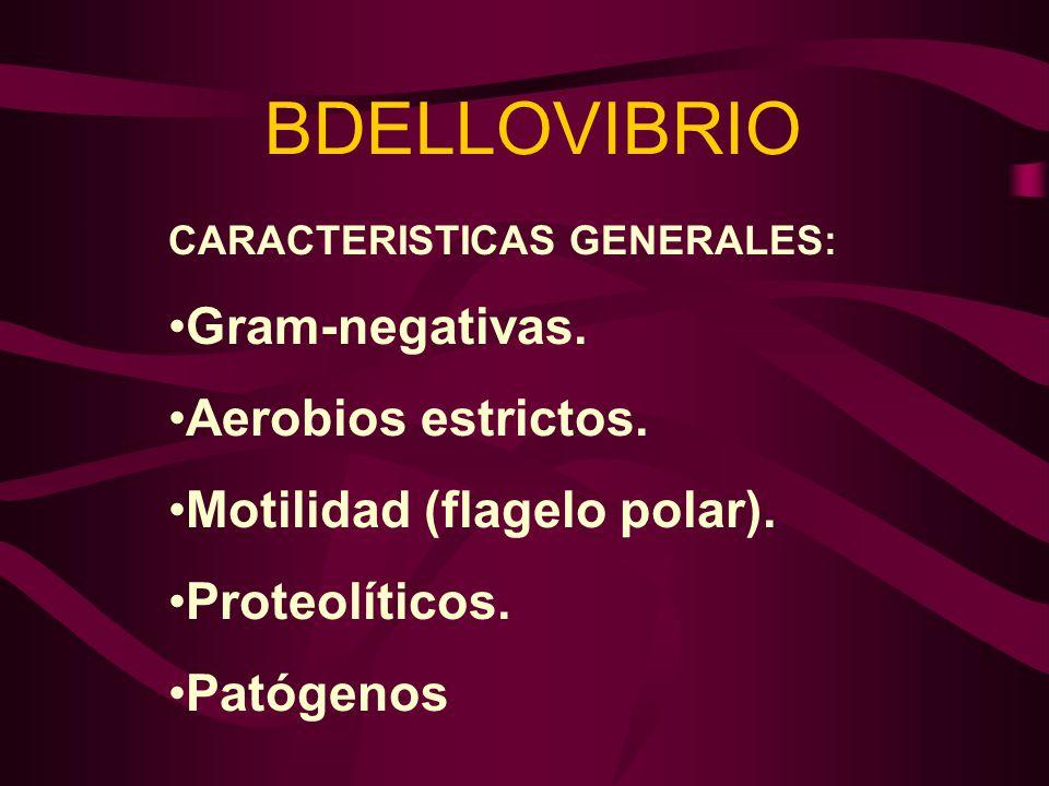 BDELLOVIBRIO Gram-negativas. Aerobios estrictos.