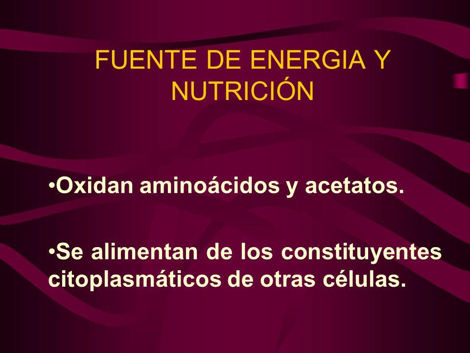 FUENTE DE ENERGIA Y NUTRICIÓN