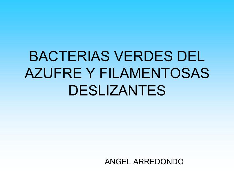 BACTERIAS VERDES DEL AZUFRE Y FILAMENTOSAS DESLIZANTES