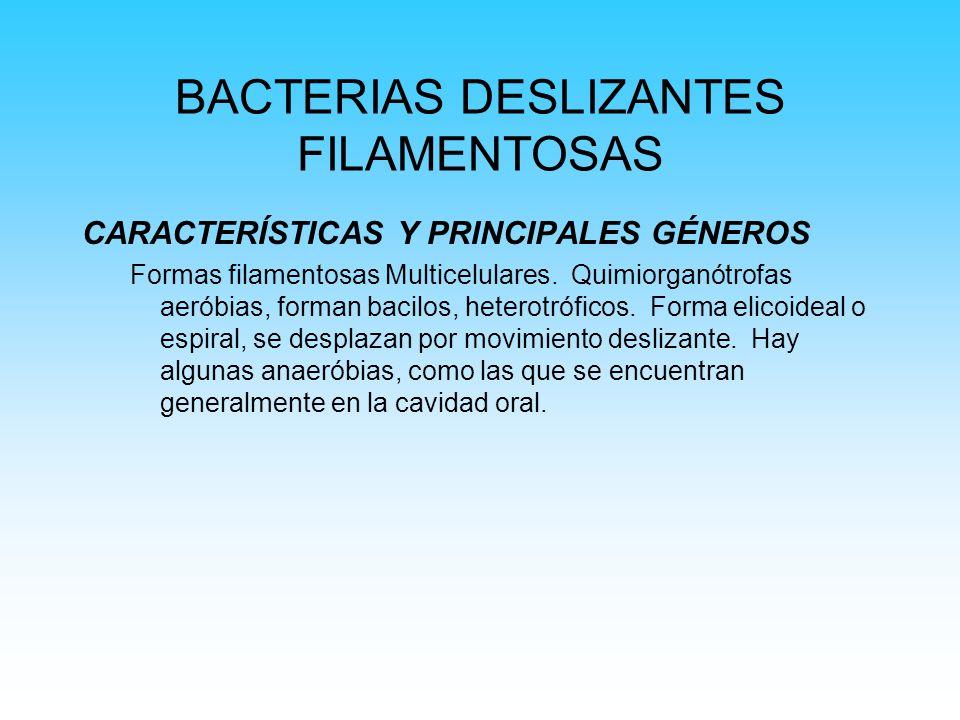 BACTERIAS DESLIZANTES FILAMENTOSAS