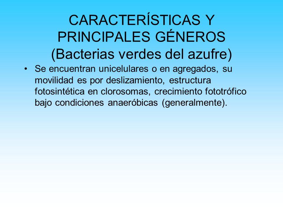 CARACTERÍSTICAS Y PRINCIPALES GÉNEROS (Bacterias verdes del azufre)