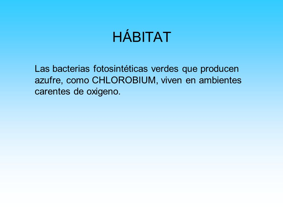 HÁBITAT Las bacterias fotosintéticas verdes que producen azufre, como CHLOROBIUM, viven en ambientes carentes de oxigeno.
