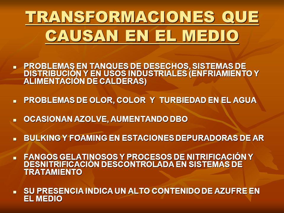 TRANSFORMACIONES QUE CAUSAN EN EL MEDIO