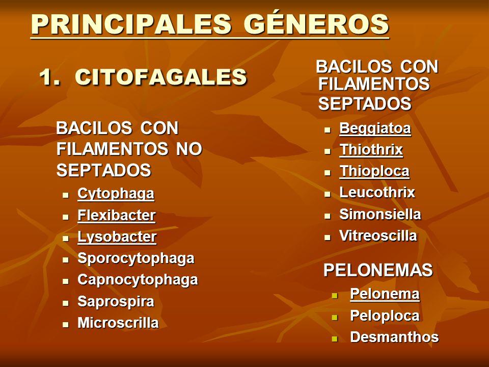 PRINCIPALES GÉNEROS 1. CITOFAGALES