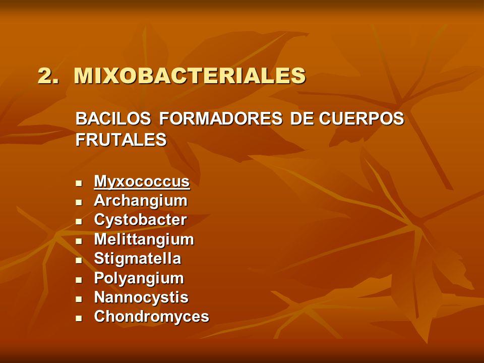 2. MIXOBACTERIALES BACILOS FORMADORES DE CUERPOS FRUTALES Myxococcus