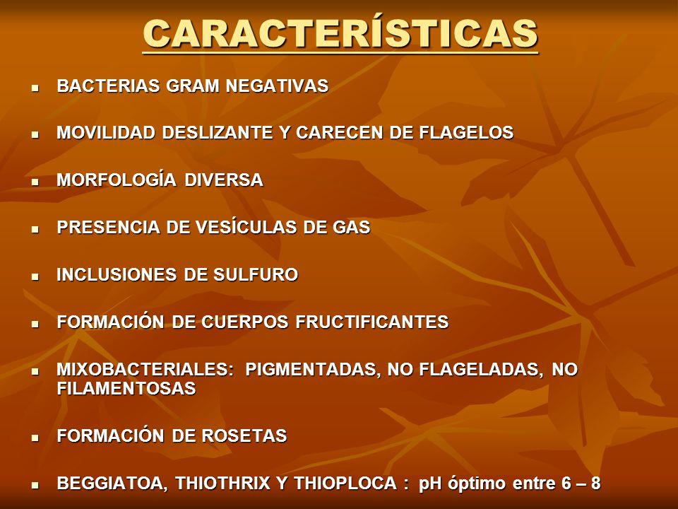 CARACTERÍSTICAS BACTERIAS GRAM NEGATIVAS