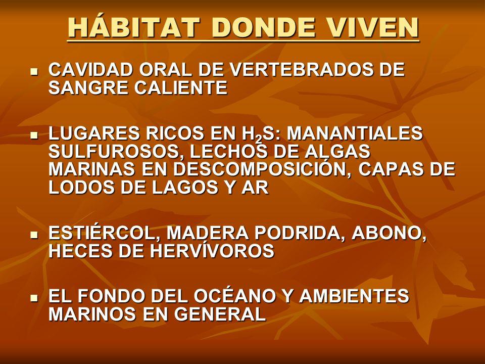 HÁBITAT DONDE VIVEN CAVIDAD ORAL DE VERTEBRADOS DE SANGRE CALIENTE