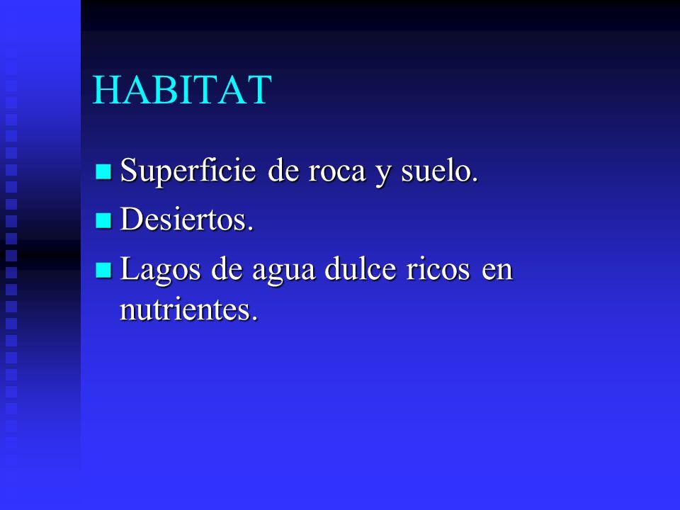 HABITAT Superficie de roca y suelo. Desiertos.