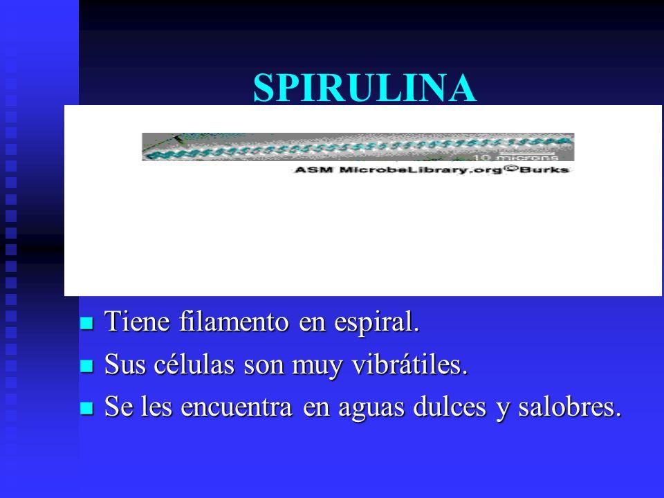 SPIRULINA Tiene filamento en espiral. Sus células son muy vibrátiles.