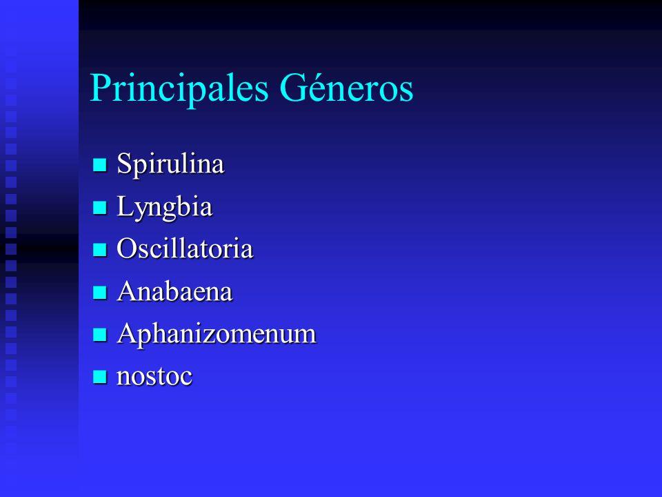 Principales Géneros Spirulina Lyngbia Oscillatoria Anabaena