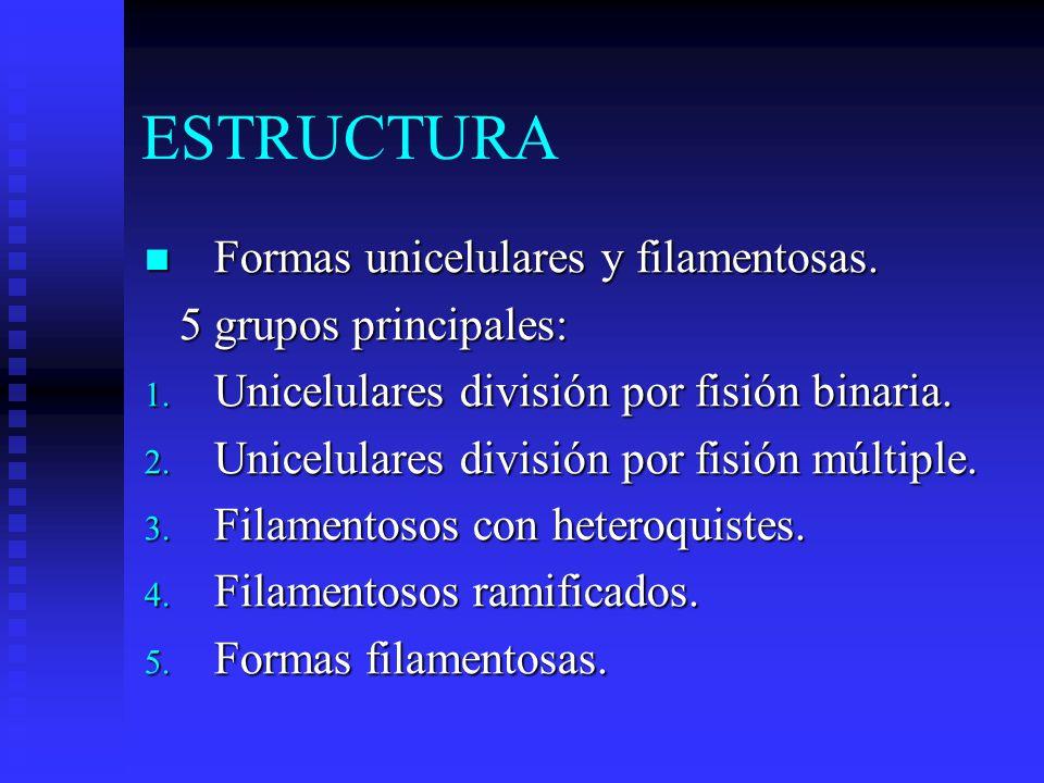 ESTRUCTURA Formas unicelulares y filamentosas. 5 grupos principales: