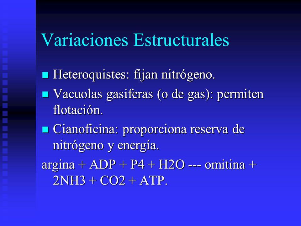 Variaciones Estructurales