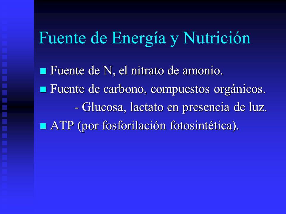Fuente de Energía y Nutrición