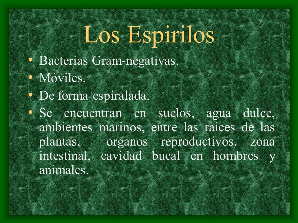 Los Espirilos Bacterias Gram-negativas. Móviles. De forma espiralada.