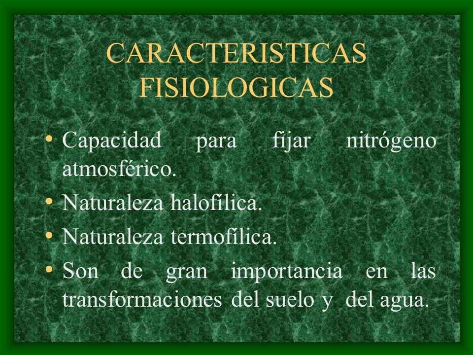 CARACTERISTICAS FISIOLOGICAS