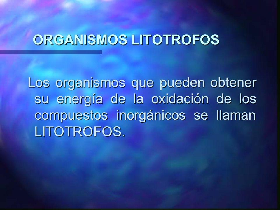 ORGANISMOS LITOTROFOS