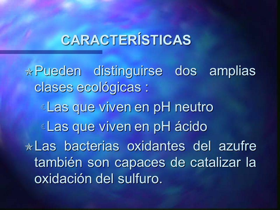 CARACTERÍSTICAS Pueden distinguirse dos amplias clases ecológicas : Las que viven en pH neutro. Las que viven en pH ácido.