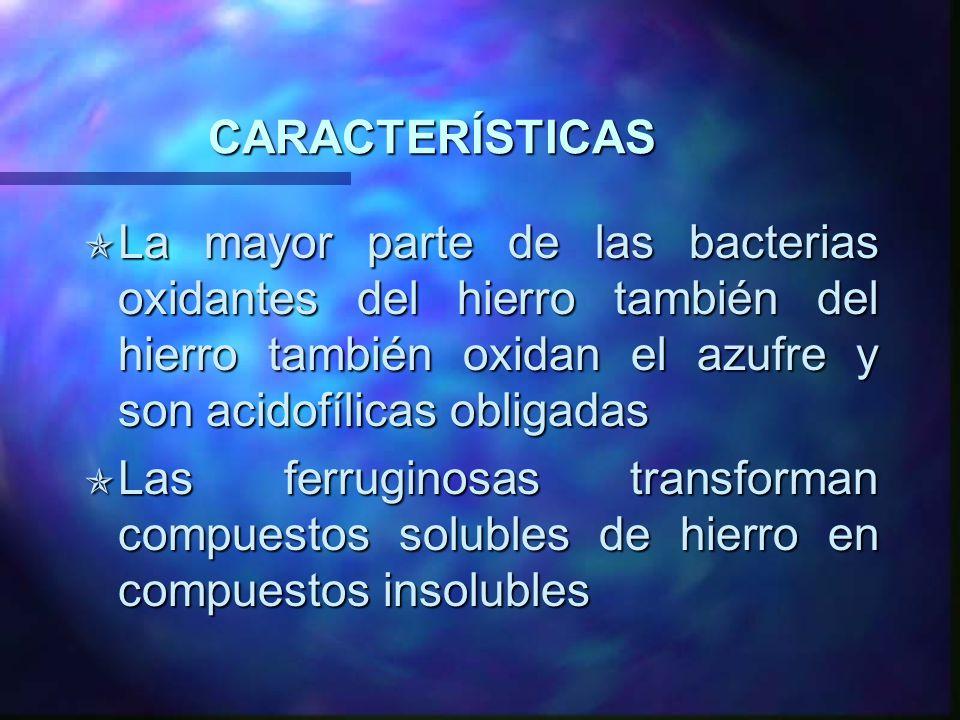 CARACTERÍSTICAS La mayor parte de las bacterias oxidantes del hierro también del hierro también oxidan el azufre y son acidofílicas obligadas.