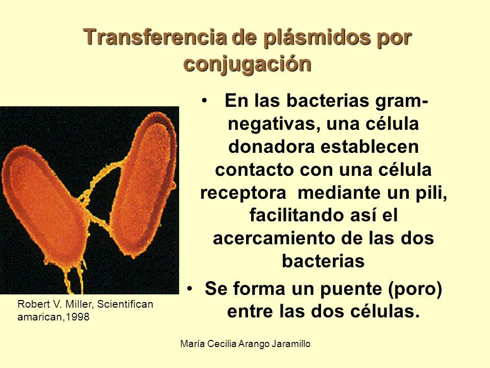 Transferencia de plásmidos por conjugación