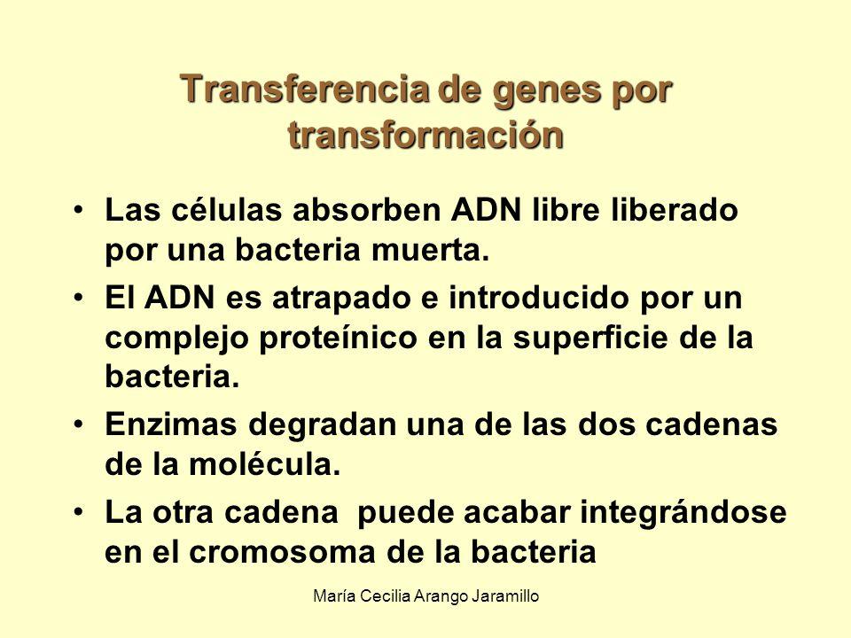 Transferencia de genes por transformación