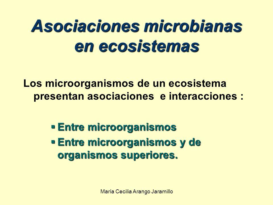Asociaciones microbianas en ecosistemas