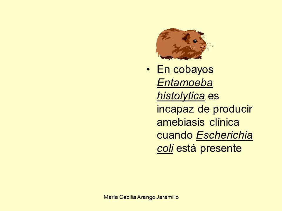 María Cecilia Arango Jaramillo