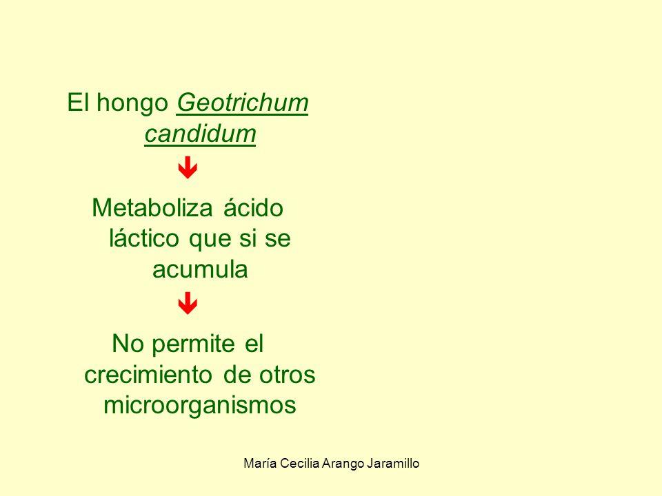 El hongo Geotrichum candidum 