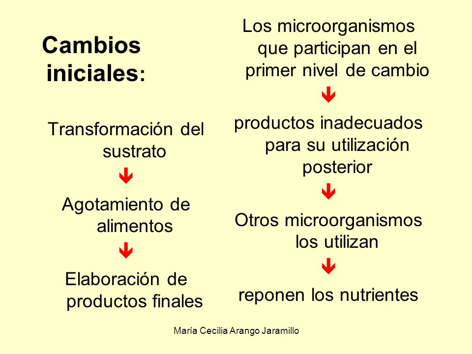 Los microorganismos que participan en el primer nivel de cambio
