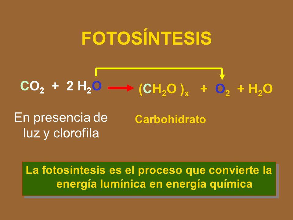 En presencia de luz y clorofila