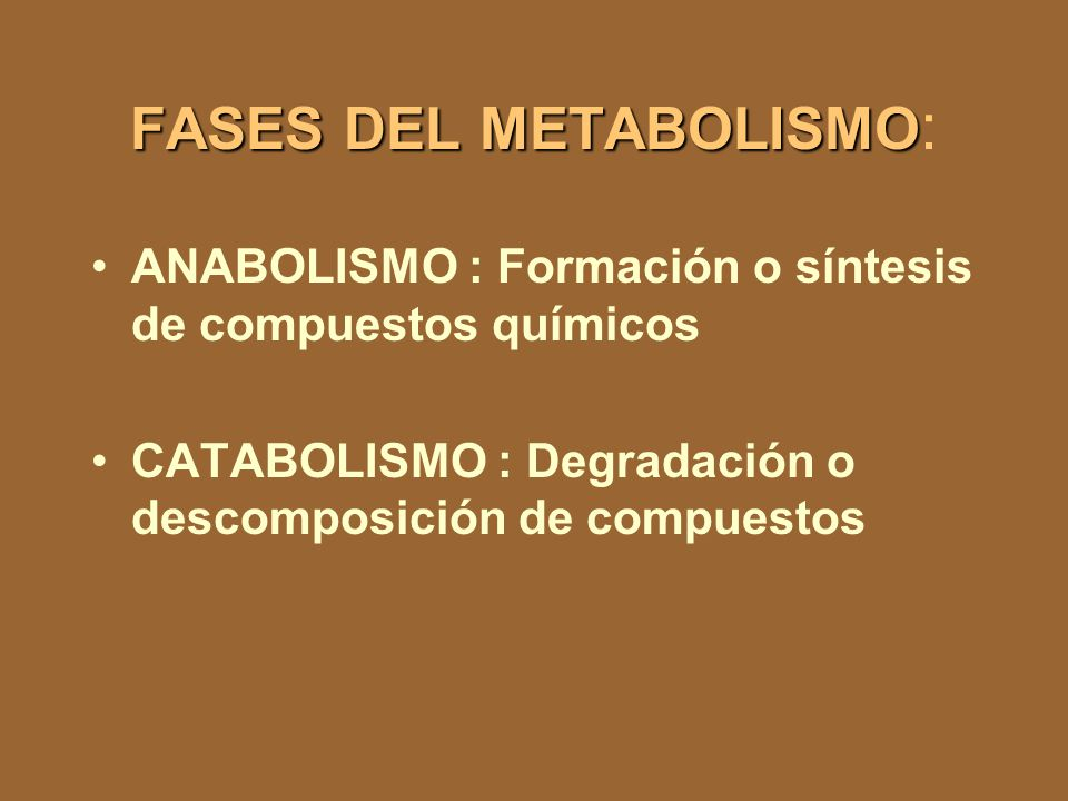 FASES DEL METABOLISMO: