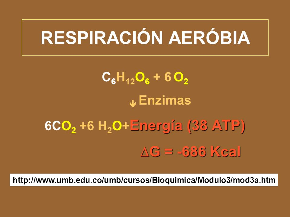 Respiración aeróbica (Rutas de utilización del piruvato por aerobios)