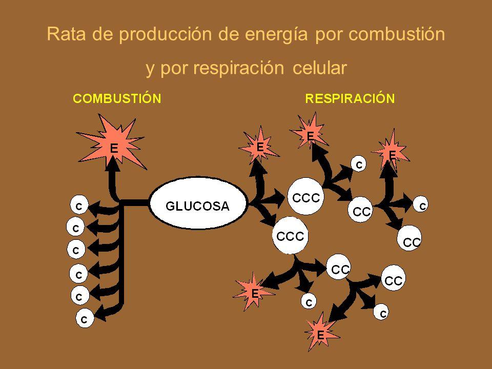 Rata de producción de energía por combustión y por respiración celular