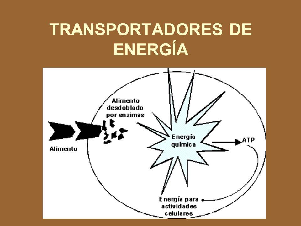 TRANSPORTADORES DE ENERGÍA