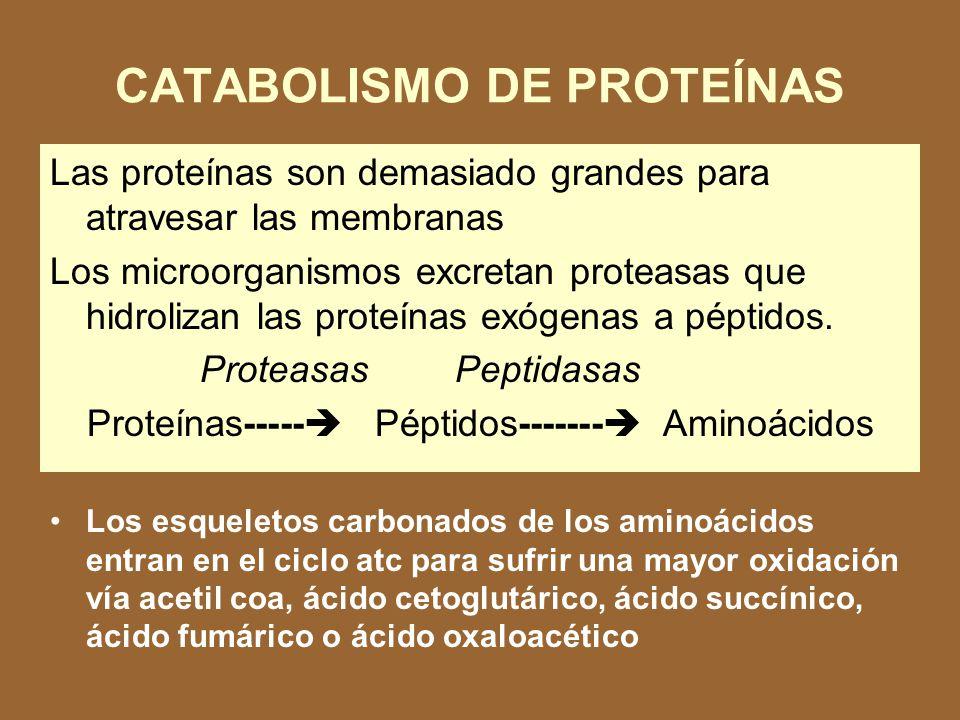 CATABOLISMO DE PROTEÍNAS