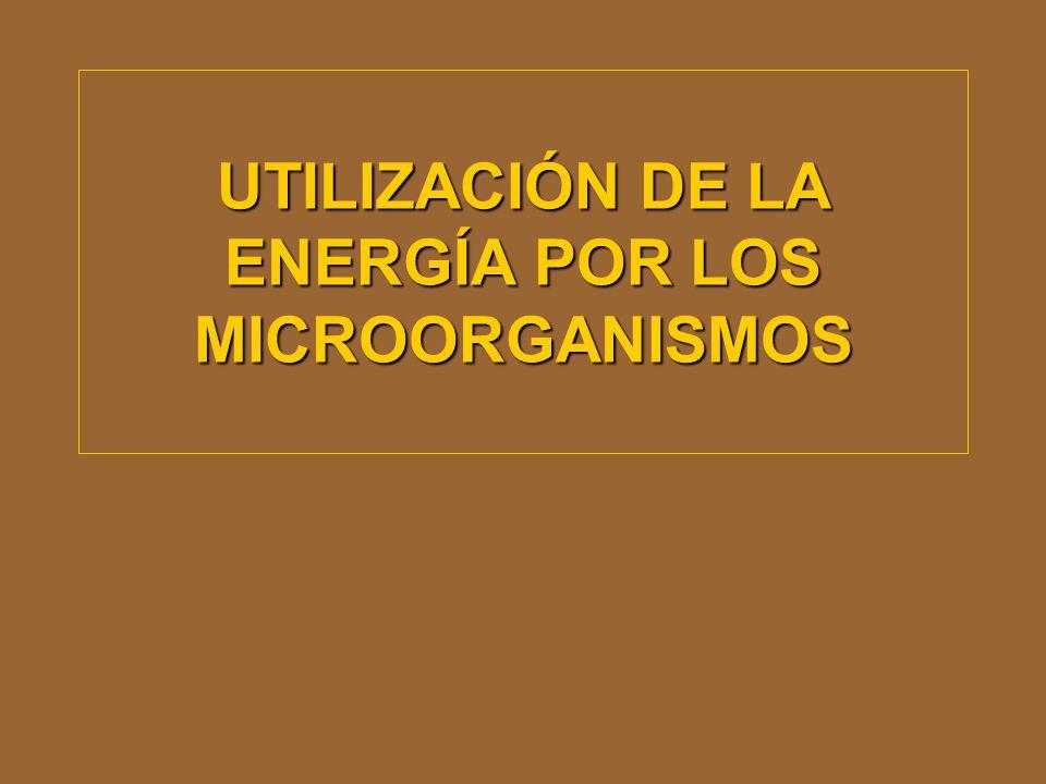 UTILIZACIÓN DE LA ENERGÍA POR LOS MICROORGANISMOS