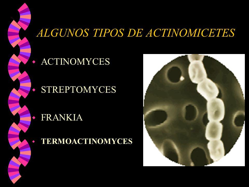 ALGUNOS TIPOS DE ACTINOMICETES