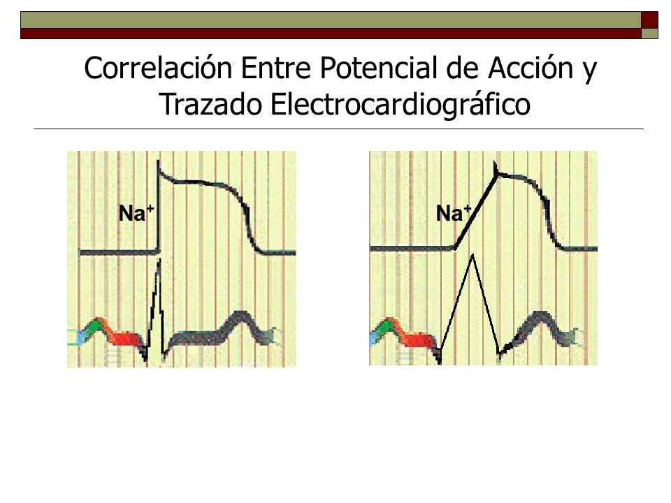 Correlación Entre Potencial de Acción y Trazado Electrocardiográfico