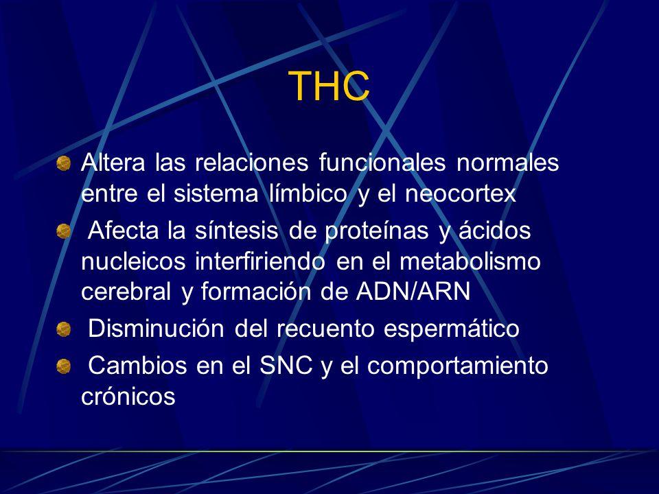 THC Altera las relaciones funcionales normales entre el sistema límbico y el neocortex.
